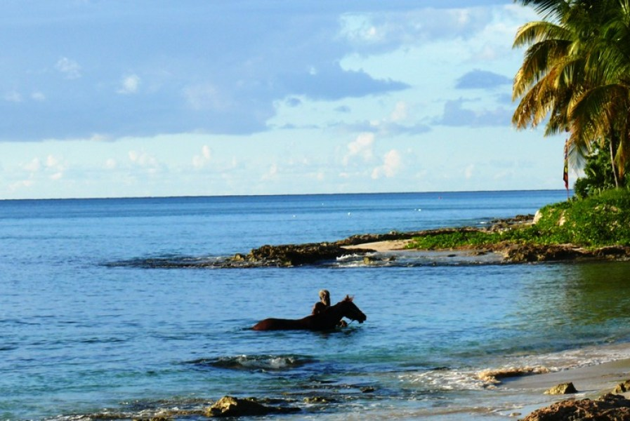 Man and Horse, Frederiksted, St. Croix. (Bill Kossler photo)