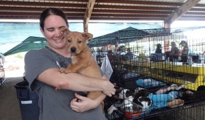 Professional responder Lindsey Cooke from North Carolina comforts a puppy at the ASPCA shelter on St. Croix.