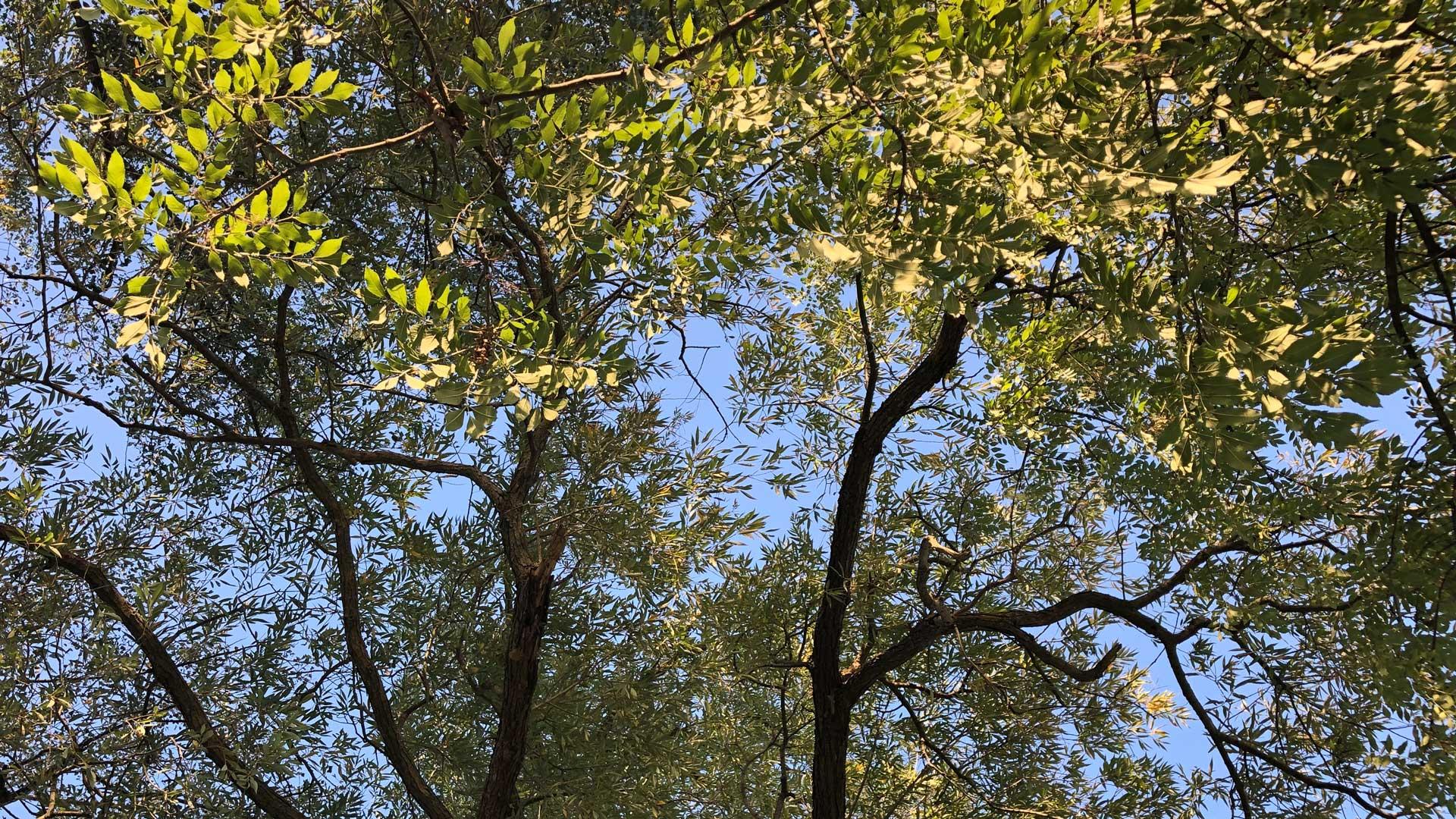 Tree view.