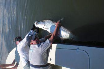 a tampa fisherman with a tarpon