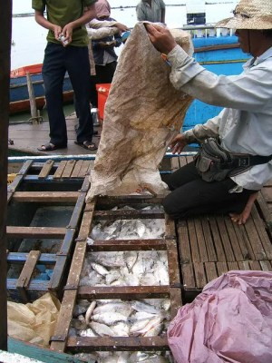 Tonle Sap Lake Fish - Shankar S