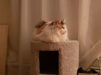 Miss Kitty...