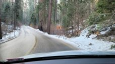 20210326_First-Sequoia-1920