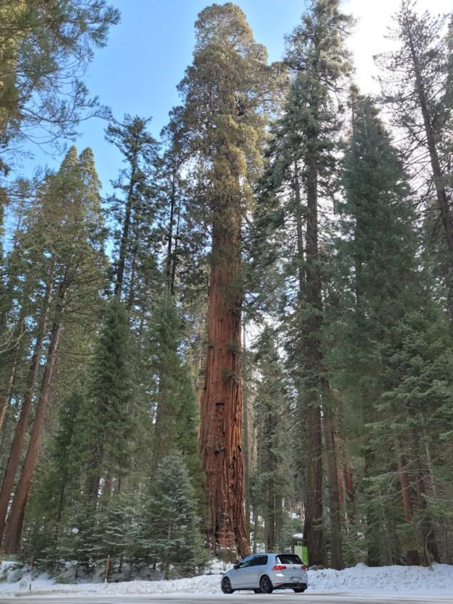 20210326_Sequoia-1920