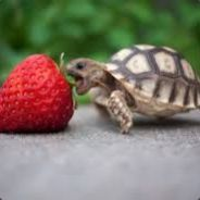 autistic turtle s profile