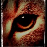 Profilbild von [HCG] aTox