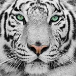 Profilbild von Trucker_King_666