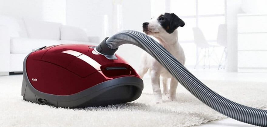 Best Home Carpet Cleaners For Pets 2019 Ideal For Dealing