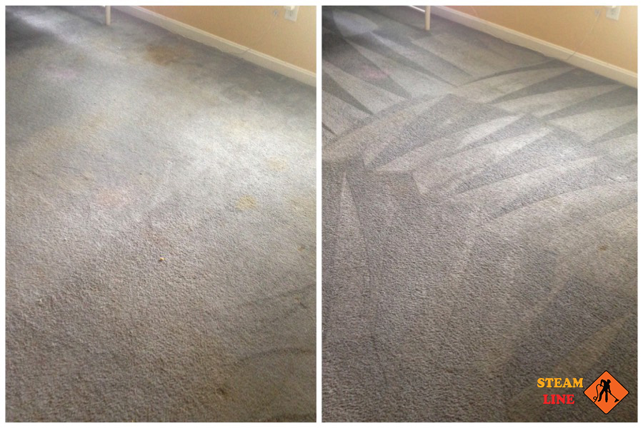 Mechanicsville pet stains cleaning