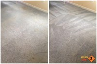 Mechanicsville pet stains cleaning - SteamLine carpet ...