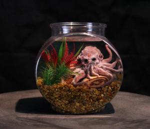 The Cthulhu Octopus Pet Aquarium. 2