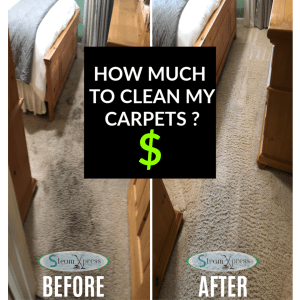 carpet cleaning reno costs