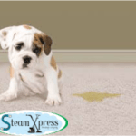 odor removal carpet cleaning