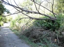 fallen tree road