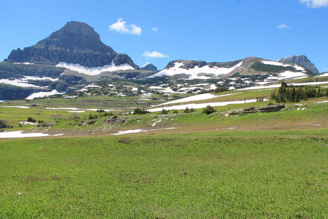Field above Logan Pass VC
