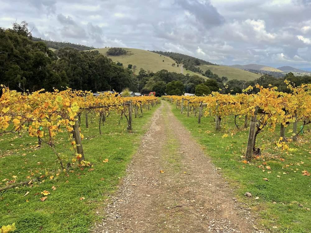Steels Gate Home Block vines
