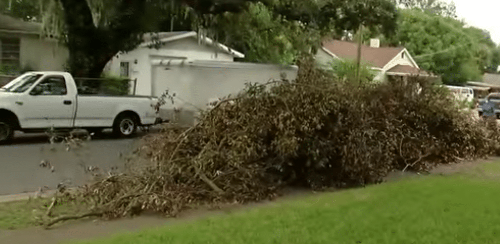 A yard clean up project that SteelSmith hauled the debris