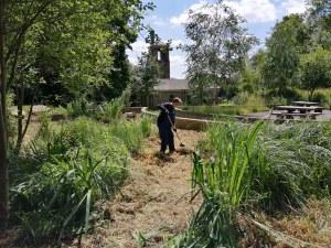 Creating a new bog garden