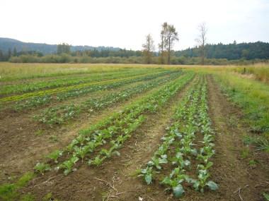 Crop beds