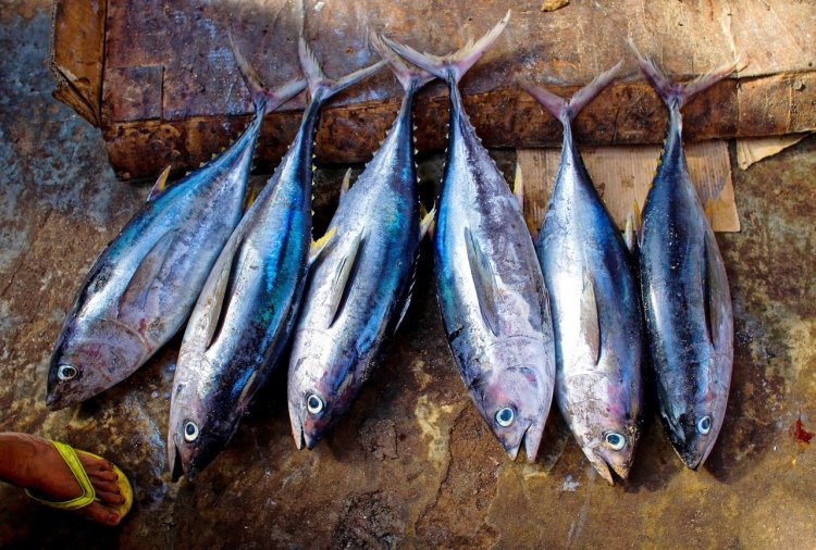 tuna-fish-954073_1920.jpg