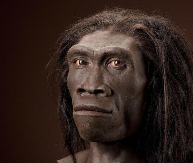 Human Evolution Homo Erectus Part  Steemkr