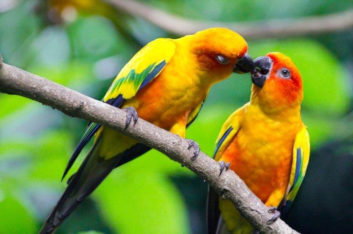 Beautiful Romantic Love Birds Images