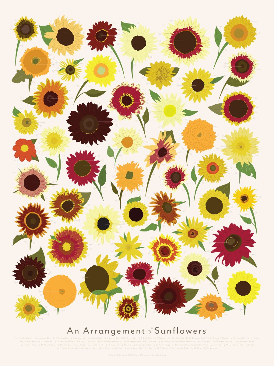 P-Sunflowers_Zoom.jpg