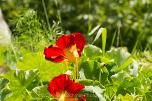 Allotment 3rd july 2014 lores-9336