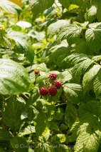 Allotment 3rd july 2014 lores-9339