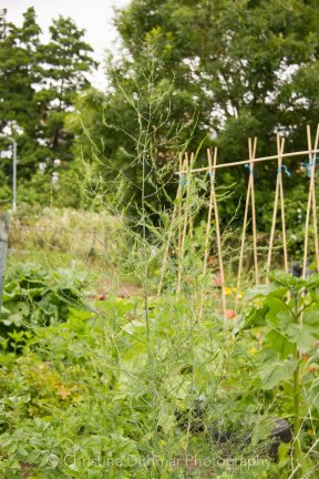 Allotment 3rd july 2014 lores-9375