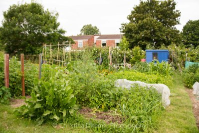 Allotment 3rd july 2014 lores-9377