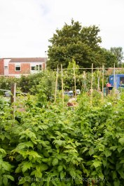 Allotment 3rd july 2014 lores-9378