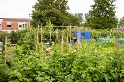 Allotment 3rd july 2014 lores-9379