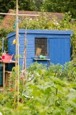 Allotment 3rd july 2014 lores-9380