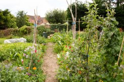 Allotment 3rd july 2014 lores-9391