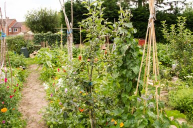 Allotment 3rd july 2014 lores-9392