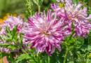 Sommer im Grugapark – Blumen und Bienen