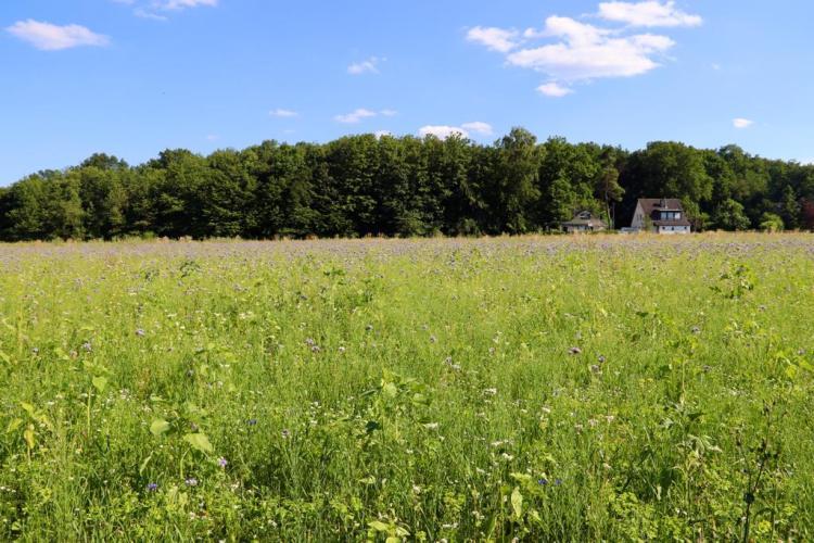 20200626_BeePart Blühwiese Hennen (11)
