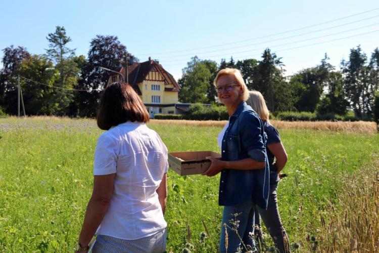 20200626_BeePart Blühwiese Hennen (9)