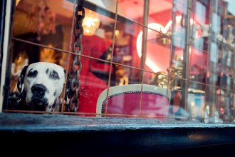 Spotted dog peering through the window of La Maison Trois Garcons