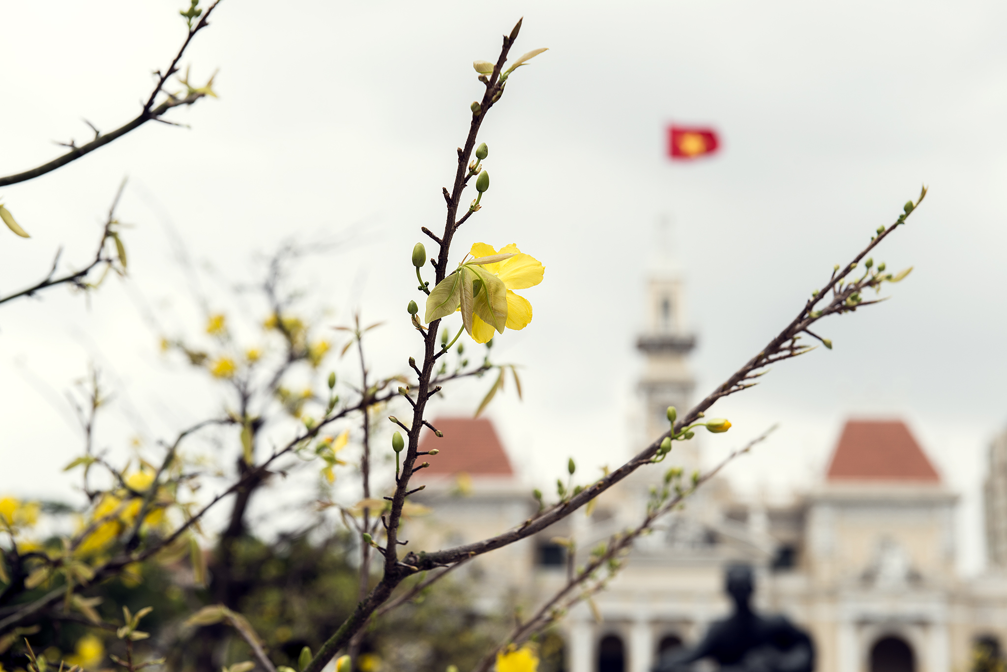Yellow blossom and red Vietnamese flag