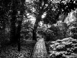 Winter Season: The Garden