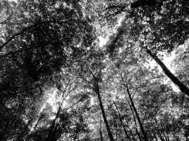 WoodTrees Black and White