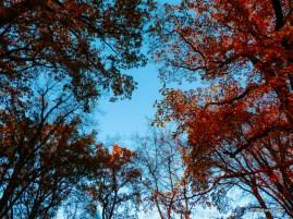 Blue Sky Late Autumn
