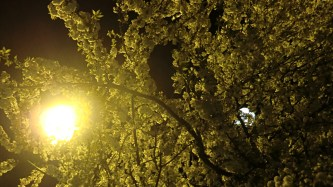Frühlingsnacht, 2015