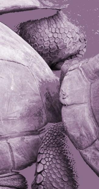 Schildkrötenwuhling (Hellabrunn), 2015
