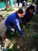planting ...