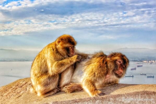 Afbeeldingsresultaat voor apenrots afbeelding
