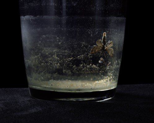 insect in a glas