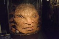 Doctor Who Experience - Cardiff Bay - La faccia di Boe